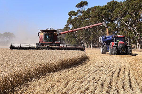 穀物大豐收 西澳農民信心漲至十年最高水平