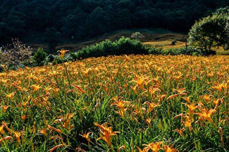 中央山脉的长青翠绿和花东纵谷的心旷神怡饱览无遗。