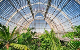 倫敦邱園收藏植物物種近1.7萬 創世界紀錄