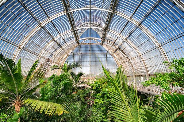 伦敦邱园收藏植物物种近1.7万 创世界纪录