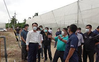 嘉县长访视悠沃木瓜 智慧科技农业推进一大步
