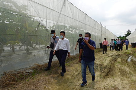 嘉義縣長翁章梁訪視悠沃農場,白茫茫一片加強型網室,因有作降溫不怕比一般更厚的網子,參觀者入內一點也沒有悶熱的感覺,這是智慧科技農業的貢獻。