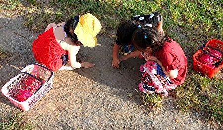 小朋友採果後體驗各種生態。