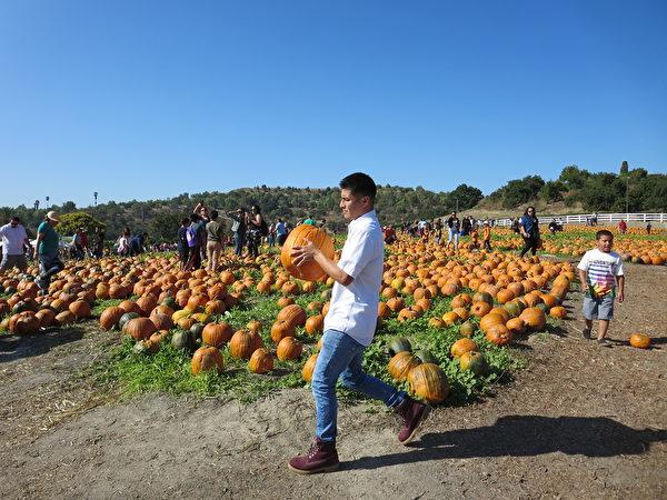 加州州大南瓜節擴大舉行 民眾體驗戶外樂趣