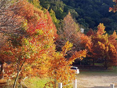武陵农场的枫红相当漂亮。