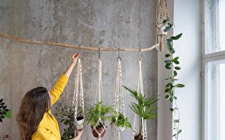 11种美丽室内悬挂植物 新手也能轻松养活