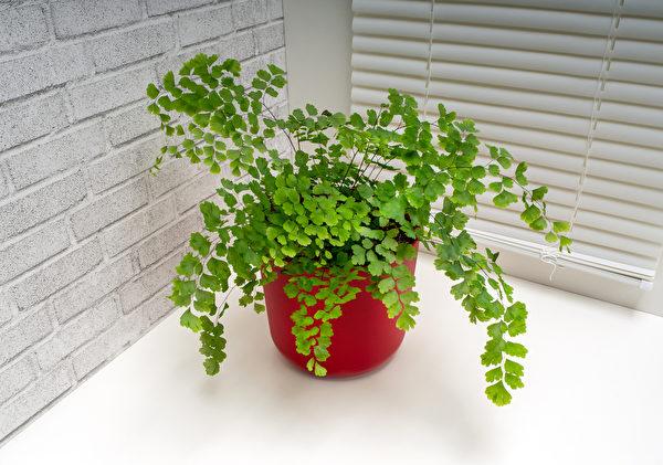 室内璇故植物