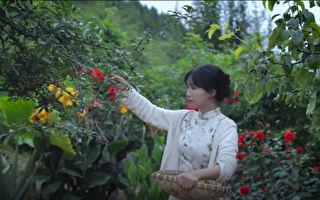 扬箭:李子柒在乡村跌了一跤,把网红摔得头破血流