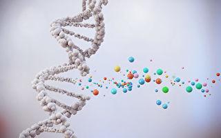 研究:DNA双螺旋断裂有助于学习和记忆