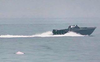 香港走私快艇威脅治安 影響海豚居住生態