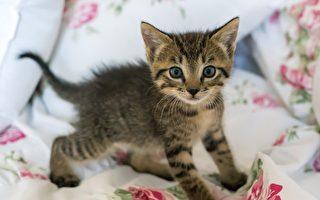 封鎖期間 領養的寵物數量增加了三分之一