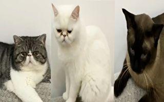 中國寵物貓因病毒檢測陽性 遭強制安樂死