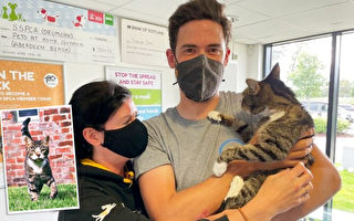 蘇格蘭寵物貓咪失蹤 十年後與主人團聚
