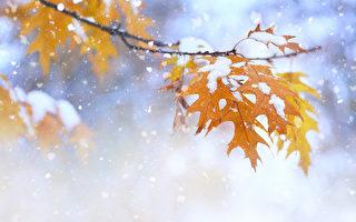 多伦多今年何时下第一场雪?