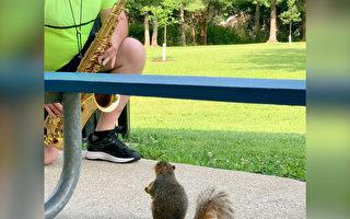 """音乐教授到公园练萨克斯 一松鼠成""""忠粉"""""""