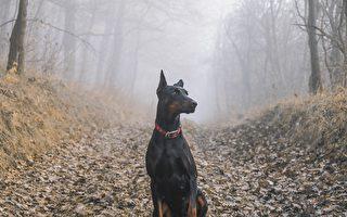 警察寻获并送回失踪爱犬 美国老翁喜极而泣