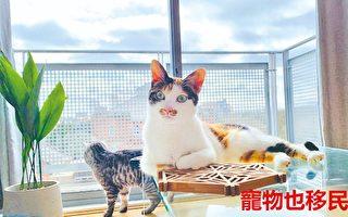 宠物也移民 港人花逾8万携爱猫赴英