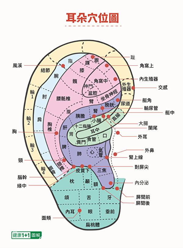 耳朵是全身的缩影,上面布满穴道,对应着身体各个部位。(健康1+1/大纪元)