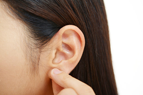 耳朵布满穴道,按压耳朵能提升免疫力、减肥。(Shutterstock)