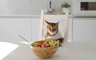 自製貓鮮食超簡單‧4道貓咪最愛的零食點心