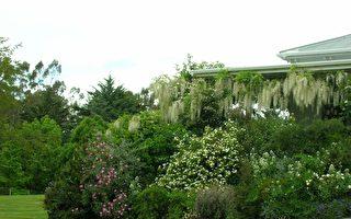 2级警报下 新西兰顶级花园活动之一被取消