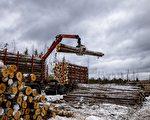 俄法院審理木材走私大案 多名中國公民涉案
