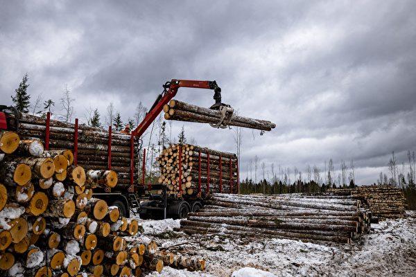 俄法院审理木材走私大案 多名中国公民涉案