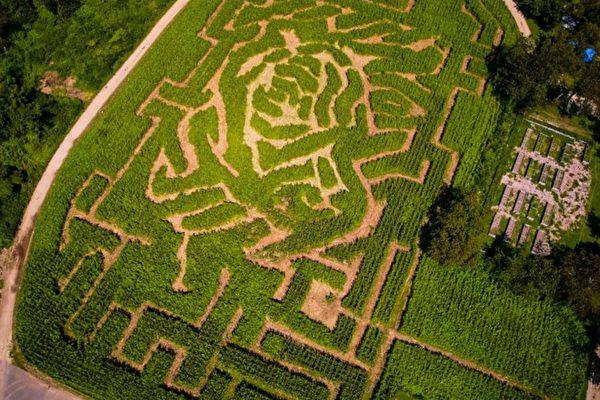 秋季亲子活动 挑战纽约市唯一玉米迷宫