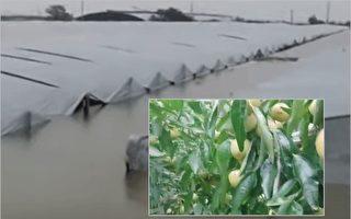 【一線採訪】陝西洪水肆虐 冬棗之鄉受重創