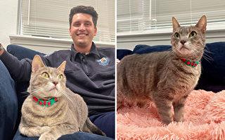動物收容所發生大火 消防員收養倖存的貓咪