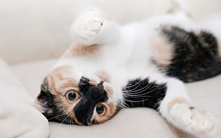 纽媒报导新西兰人养猫新趋势:只养在室内