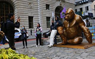 美国华尔街竖立大猩猩铜像 与铜牛相望