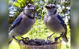 组图:女子自制喂鸟器相机 捕捉鸟类特写