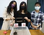 动物会比大小 台师大研究发现乌龟数字感觉能力