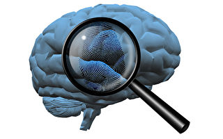 研究发现大脑指纹可及早侦测阿兹海默症