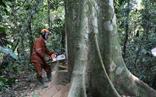 刚果审查伐木权 或冲击中企