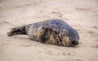 野生小海豹现身 台湾渔港来了罕见稀客