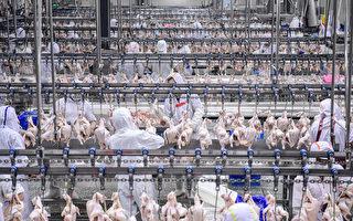 中國H5N6禽流感病例增加 專家:或是新變種