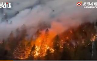 西藏林芝市發生森林大火 火勢迅猛